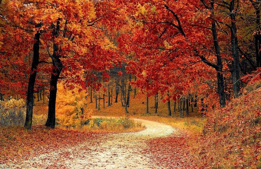 Giornate di autunno del Fai: un territorio scrigno di autentiche meraviglie