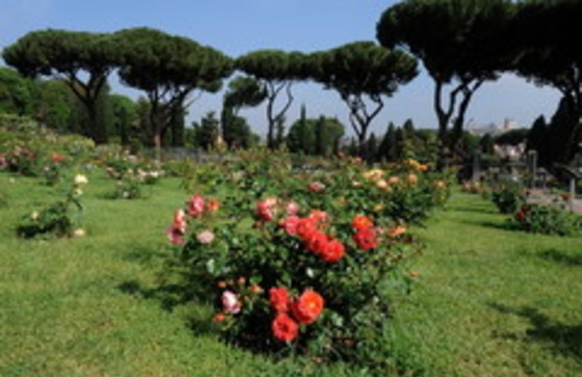 Roma, fioritura autunnale al Roseto comunale, apertura al pubblico da domenica 11