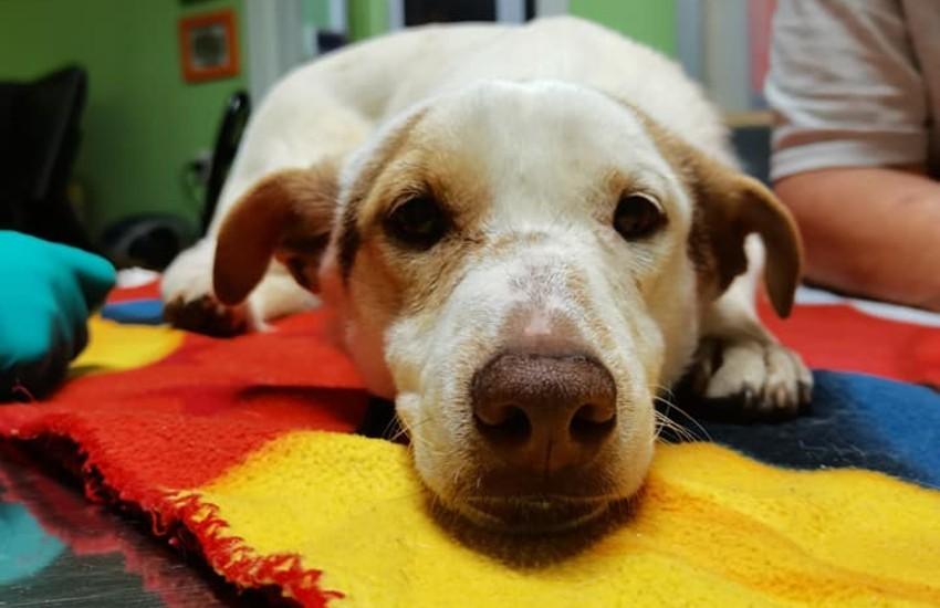 Sezze, cane salvato dai volontari di Chance for dogs: era condannato a morire