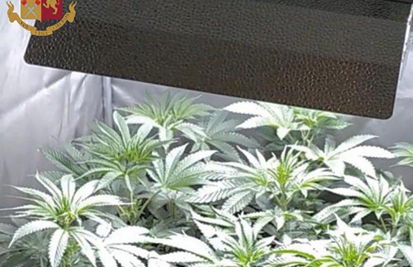 Coltiva in casa marijuana, denunciato fiorentino di 52 anni