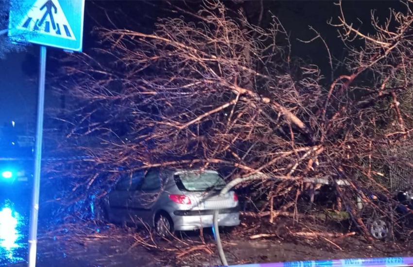 Un albero si abbatte sulla strada mentre passa un'auto. Salvi mamma e i suoi bambini