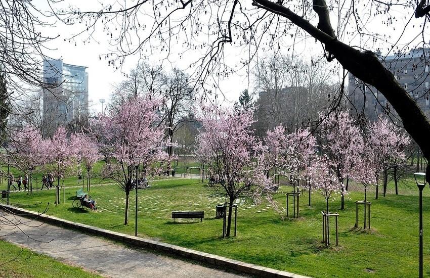 Milano, il Comune avrà il Garante del verde, del suolo e degli alberi