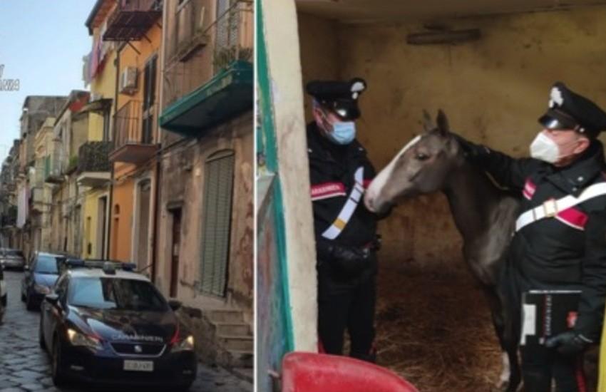 San Cristoforo, stalla abusiva, sequestrato un cavallo e due pony