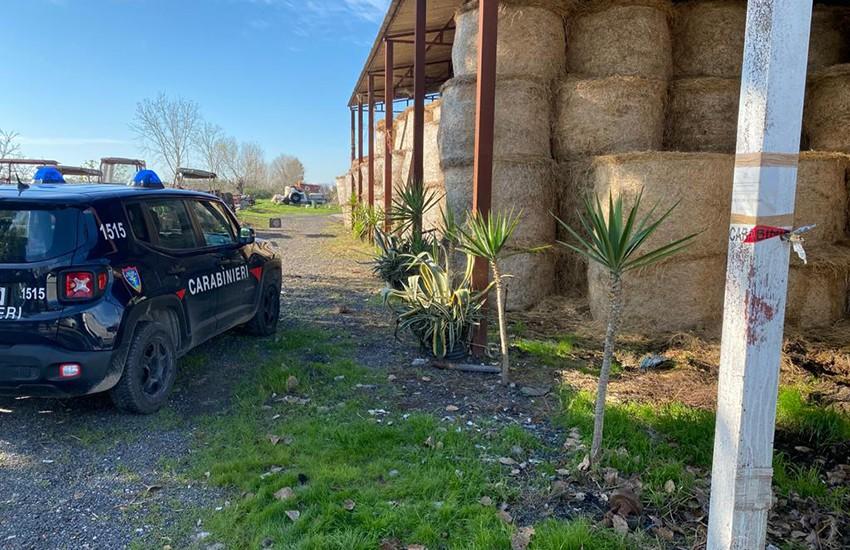 Sequestrato allevamento bufalino di Grazzanise in pessime condizioni ambientali