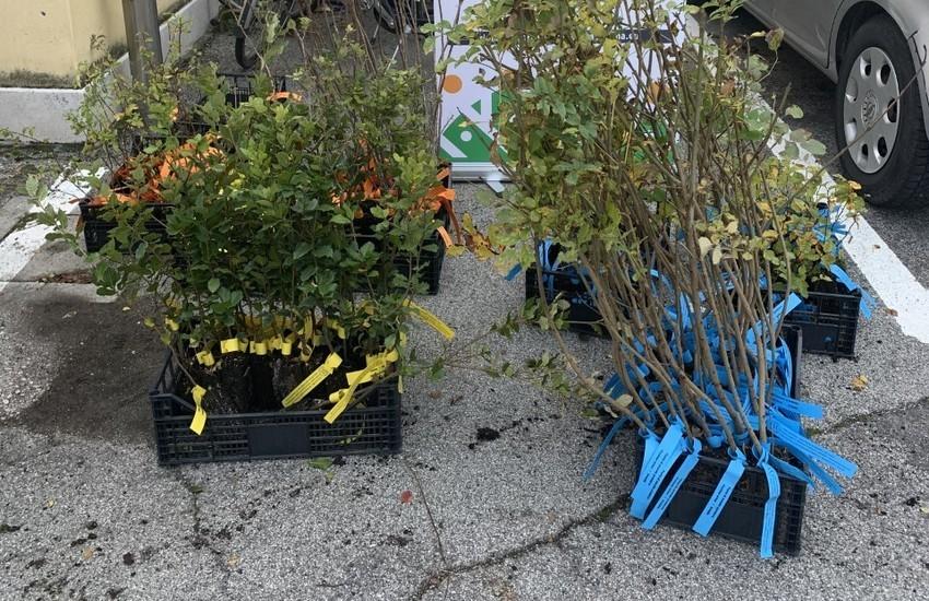 Il Comune di Venezia dona 450 piante ai cittadini