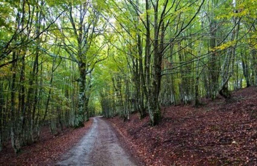 Forestali, approvato atto di interpello per 100 nuovi agenti