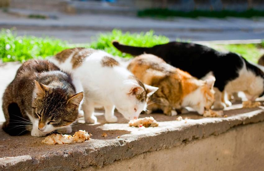 Orrore a Pontinia: una intera colonia di gatti sterminata col veleno per topi
