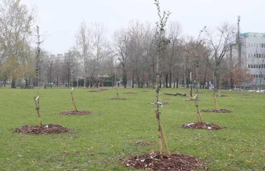 Bologna: mille nuovi alberi messi a dimora nei parchi e nei giardini