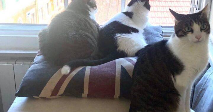 Colonie feline: al via la chippatura dei gatti