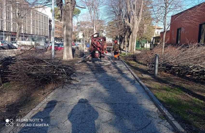 Verde pubblico, interventi di manutenzione: potatura alberi