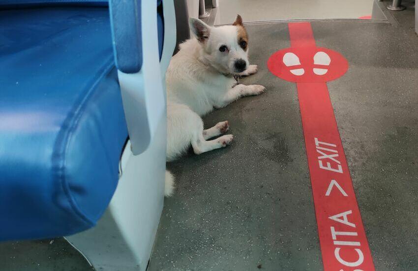 Spaventato dai botti di fine anno, cagnolino scappa e si si rifugia su un treno
