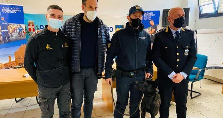 Ecco Luke, il cane poliziotto di Treviso