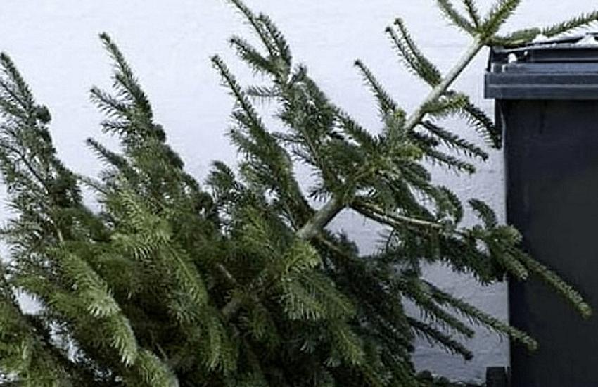 Aamps avvia la raccolta degli alberi di Natale