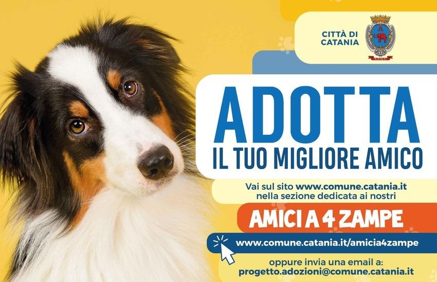 Catania, si può adottare un cane scegliendolo on line