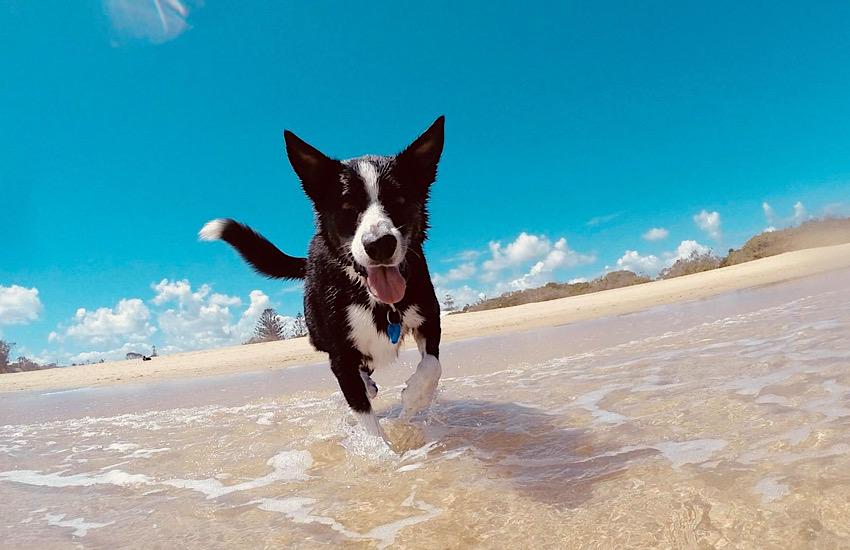 Spiaggia attrezzata 'Dog beach': pubblicato il bando per la gestione 2021
