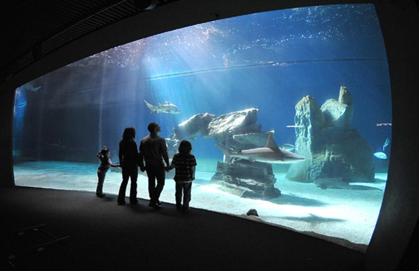 Acquario di Genova e Galata Museo del Mare riaprono al pubblico