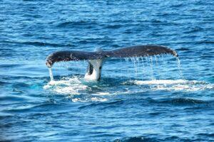 Nuova Zelanda: 40 balene spiaggiate