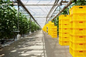 39 aziende siciliane dell'agroalimentare al Cibus di Parma