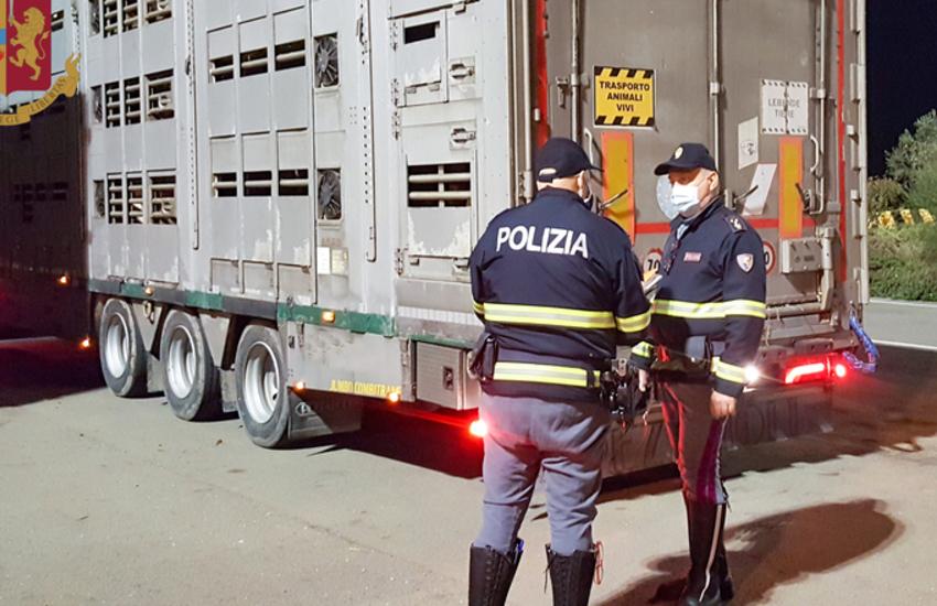 Civitavecchia, irregolarità nel trasporto di animali vivi, 22 sanzioni per 30.000 euro