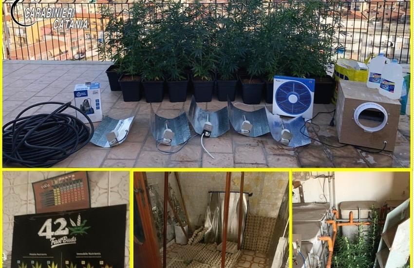 Catania, non riesce ad entrare in casa, Carabinieri  scoprono una coltivazione di marijuana nella sua abitazione