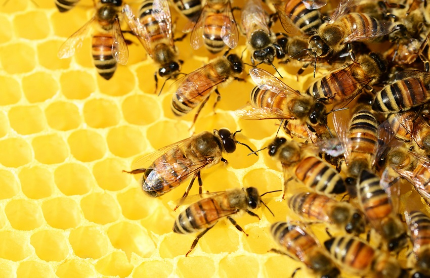 Vita da ape: la mostra al Museo civico di zoologia di Roma