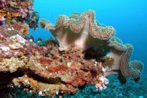 Restauro delle scogliere coralline: accordo tra Università di Milano-Bicocca e governo delle Maldive
