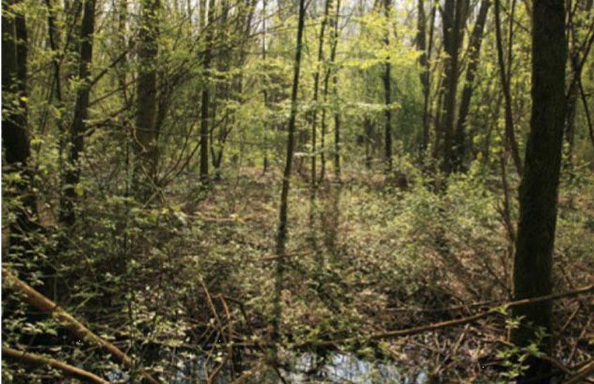 Aree verdi, conservazione dell'orso marsicano e implementazione della ricettività