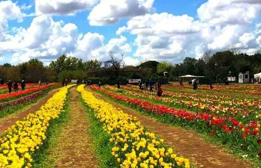Torna Tulipark, 360mila tulipani a portata di mano