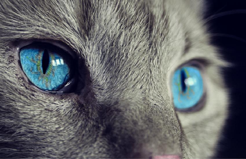 Torino, gattini caduti dal balcone e altri in precarie condizioni igieniche: denunciate le proprietarie