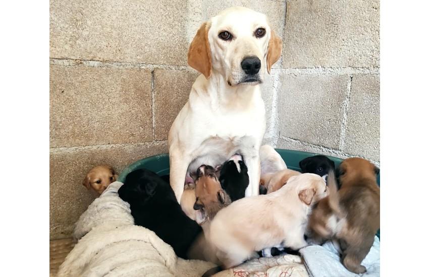 Priverno, 9 cuccioli di cane abbandonati al freddo: si salvano solo in tre…