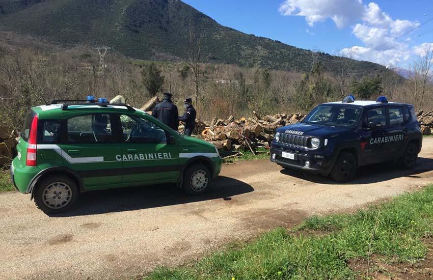 A Mignano Monte Lungo una strage di alberi per farne legna da ardere nonostante i divieti