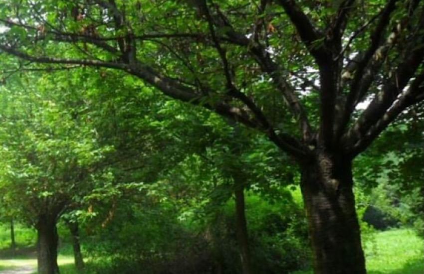Nuovi alberi grazie al progetto Carbon neutral