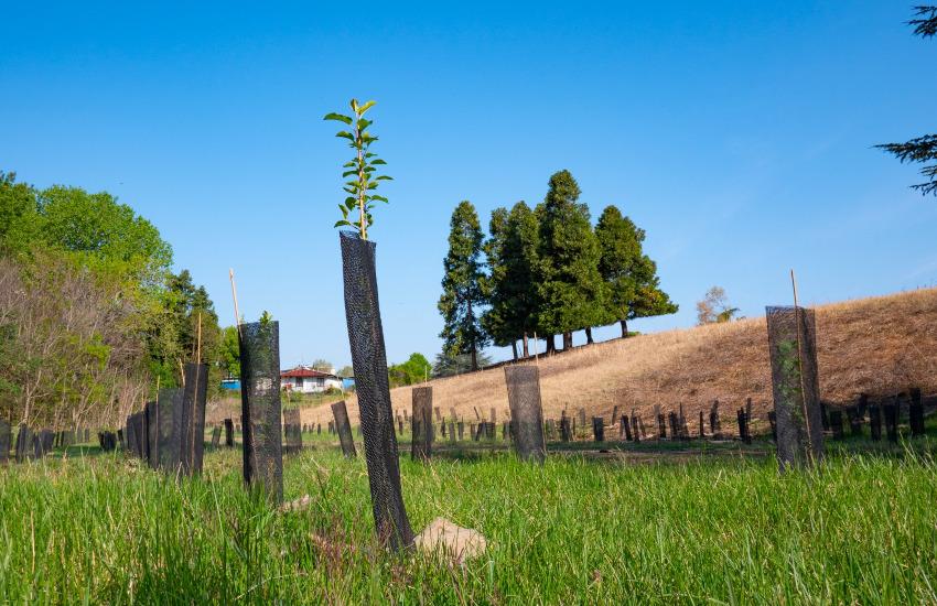3.000 nuovi alberi a Parco Piemonte grazie a IKEA