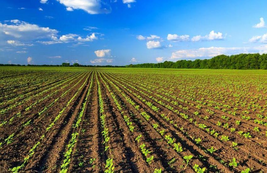 Aperti i bandi del PSR su agroalimentare e biologico in Piemonte