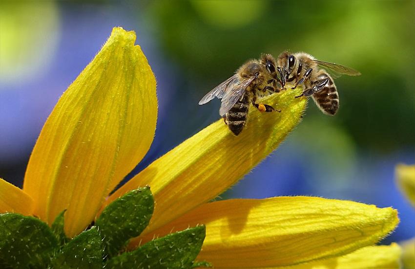 Una casa per le api solitarie: a L'Aquila un innovativo progetto per salvare gli impollinatori