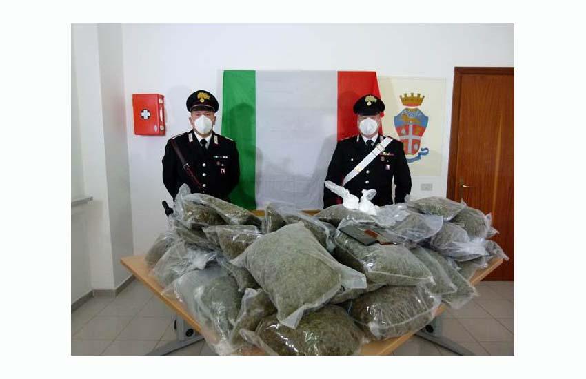 Pratella, smantellata una vera e propria azienda di produzione di marijuana