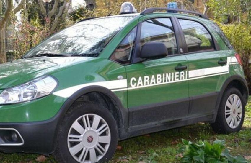 Controlli dei carabinieri nell'Alessandrino: maxi sanzioni a Casale Monferrato e Stazzano