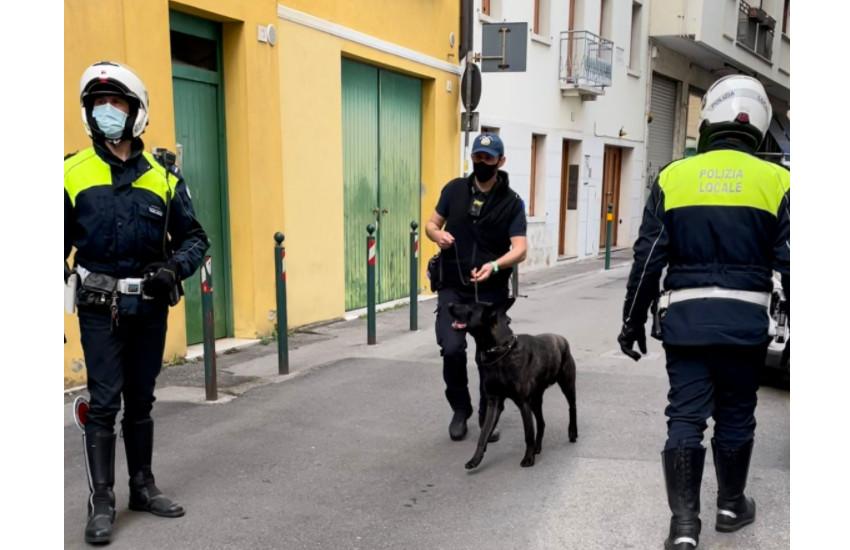 TREVISO, POLIZIA LOCALE, CONTROLLI CON IL NUCLEO CINOFILO ANTIDROGA IN VIA ROMA E VICOLO ORIOLI