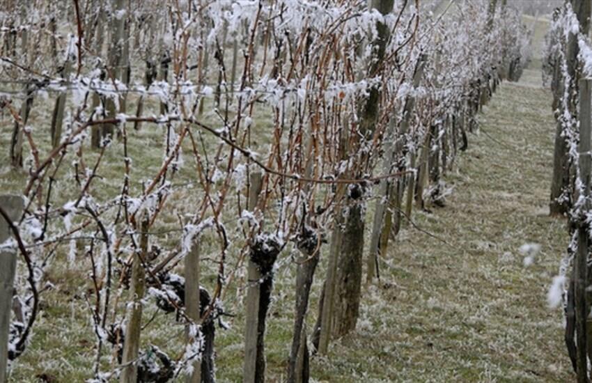 La Regione Piemonte chiede finanziamenti al Ministero per compensare i danni causati dalle gelate