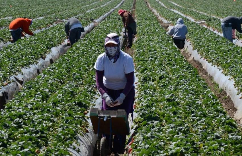 Braccianti agricoli, a Nardò torna l'ordinanza anticaldo