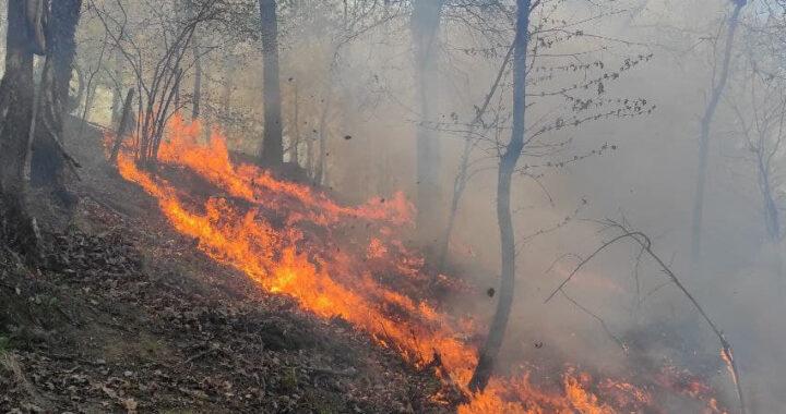Marradi: incendio boschivo in località Campigno