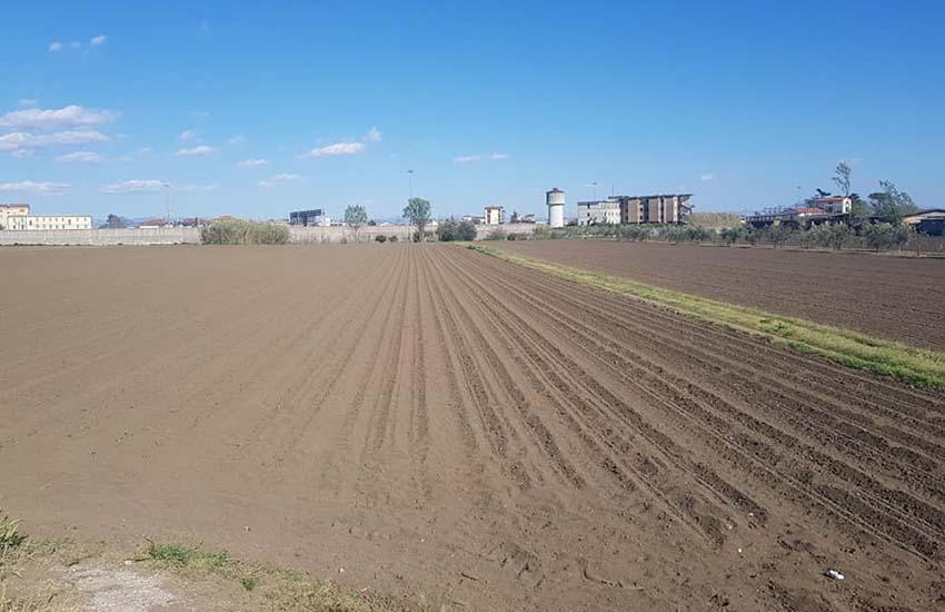 Villa Literno, a rischio la coltura dei pomodori. L'appello alle istituzioni