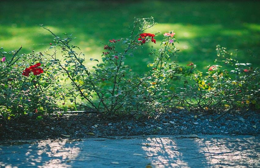 Al via il taglio erba primaverile in tutta la città e a Quercianella