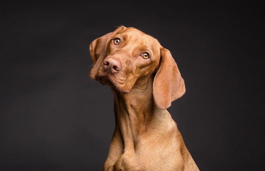 Vive con 40 cani in 50 metri quadrati: denunciato