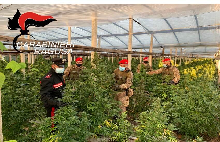 Maxi piantagione di cannabis a Vittoria: carabinieri arrestano due persone e sequestrano oltre 1000 piante