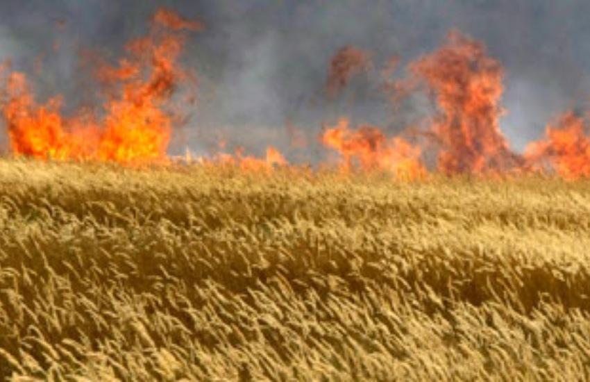Rischio incendi, pericolo per i campi di grano. Greco scrive al Prefetto: maggiori controlli