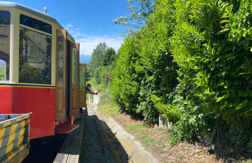 Torino, capriolo ferito sulla tramvia Sassi-Superga: interviene il personale del CANC (FOTO)