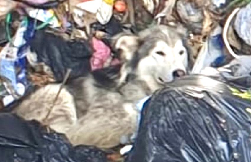Salvato un cane finito nelle vasche dell'organico in discarica