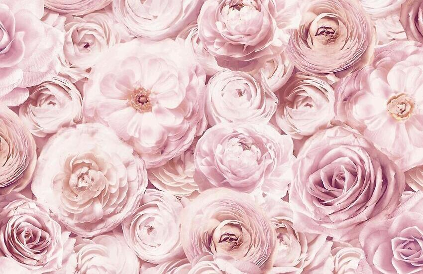 Fiori rosa