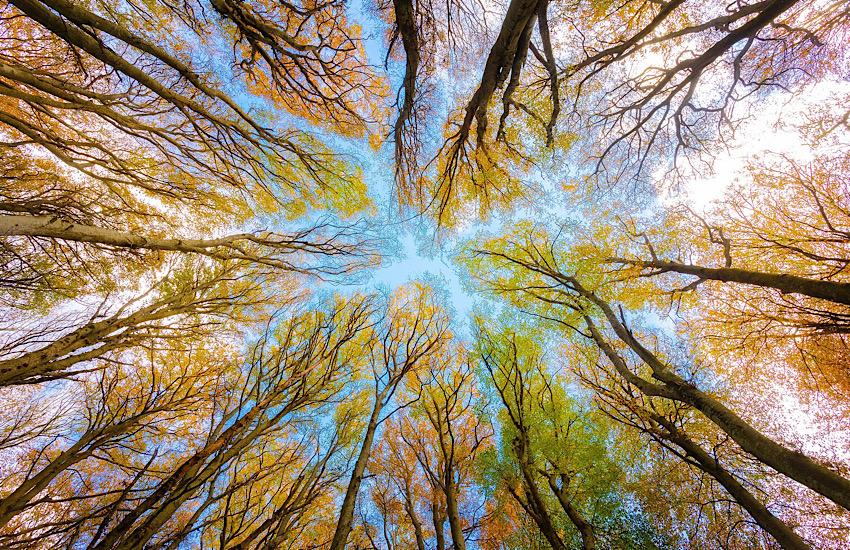 900 alberi in più a Livorno